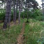 Stezka k lomu Bílý kaňon po hřebeni